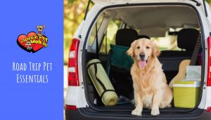 Road Trip Pet Essentials May 2021